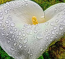 My Heart's Tears by Wendi Donaldson