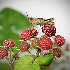 Grasshopper 1 by Becky Trudell