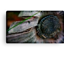 twilight blossoms Canvas Print