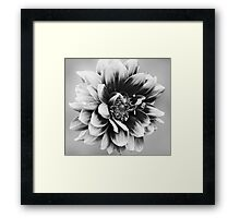 Who needs Colour Framed Print