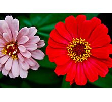 Red & Pink Photographic Print