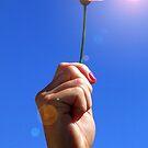 Sunflower by RodMC