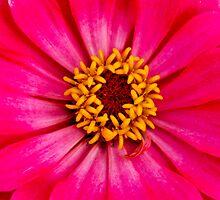 Dressed In Pink by Neha  Gupta