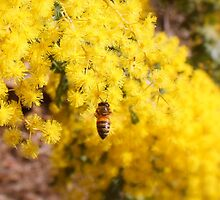 buzzing bee by Sarah-Ashley