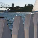 Sydney by breewood