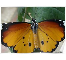 AMAZING BUTTERFLY!!! Poster