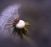 A fleeting moment by IngeHG