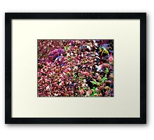 Caught Flying Around!  Framed Print