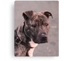Mia : Staffordshire Bull Terrier Canvas Print