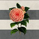 botanical stripes - camellia by beverlylefevre
