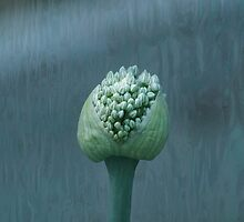 Onion on Aquaskin by Eileen McVey