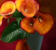 The Calla lily  by John44