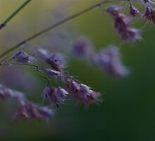 Feathery Weed by Liz Worth
