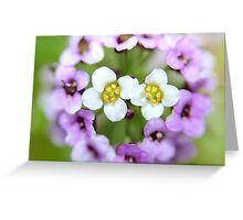Beautiful Blur Greeting Card
