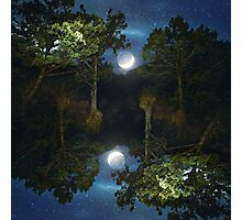 Moonset in coniferous forest Photographic Print