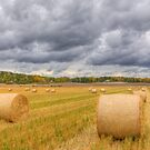 Harvest Time by Veikko  Suikkanen