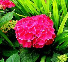 Brightfully Pink  by shelleybabe2