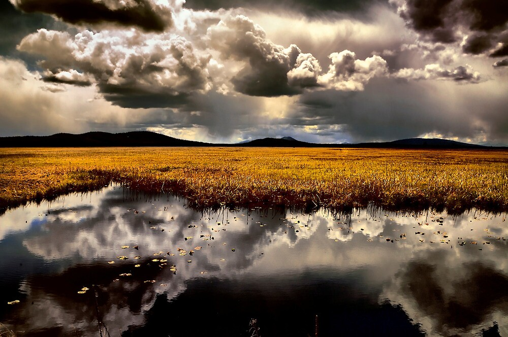 Klamath Marsh Afternoon - USA - by Charles & Patricia   Harkins ~ Picture Oregon
