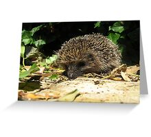22 - HEDGEHOG IN OUR GARDEN (D.E. 2011) Greeting Card