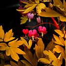 Bleeding Hearts in the Dark by Charles &amp; Patricia   Harkins ~ Picture Oregon