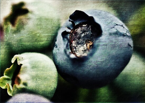 Blueberry View by Astrid Ewing Photography