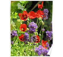 Poppies & Lavender Poster