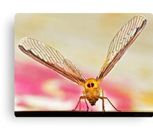 Wing Spread....... Canvas Print