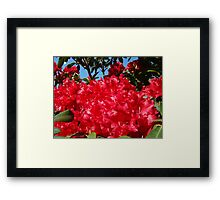 Red Rhododendrons Flowers Floral art prints Framed Print