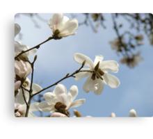 White Magnolia Flower Tree art prints Spring Canvas Print