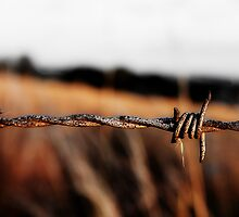 Barbed on a Hill by AndrewBerry