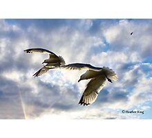 Soaring Beneath The Clouds Photographic Print