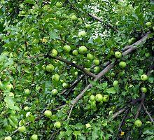 Little green Apples by katpix