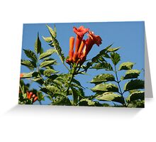Trumpets Greeting Card