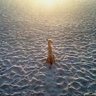 Dog on beach by Waynek