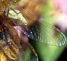Dragonfly Wing Art! by PatChristensen