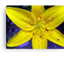 Yellow Lilly with insect aboard   Canvas Print
