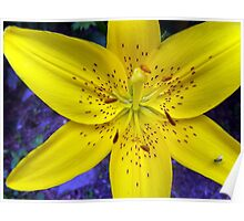 Yellow Lilly with insect aboard   Poster