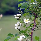 Country Summer Wild Flowers by Tammy Devoll