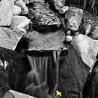 Sunken Gardens Flowers B&W by Christopher Hanke