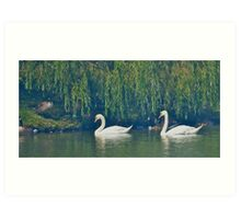 Tranquil Afternoon on the Pond Art Print