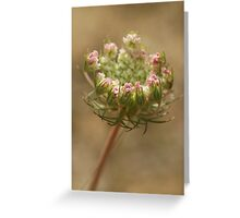 Wild Carrot Greeting Card