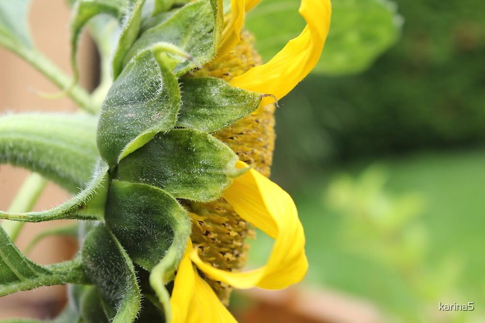 Sunshine Flower by karina5
