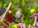 Sparrow and Flowers by Carol Bleasdale