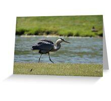 Heron Fluff Greeting Card
