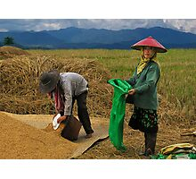 RICE WORKERS - BURMA Photographic Print