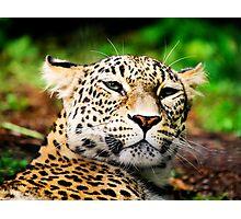 Leopard Portrait Close up  Photographic Print