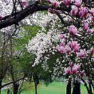 Spring Blooms by Tammy Devoll