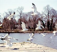 Seagulls on the water by jamiecwagner