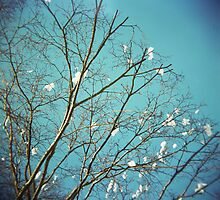 Tree with flowers on Blue Sky by jamiecwagner