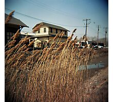 Reeds by the Creek Photographic Print